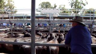on the sales yard - 13.01.12.