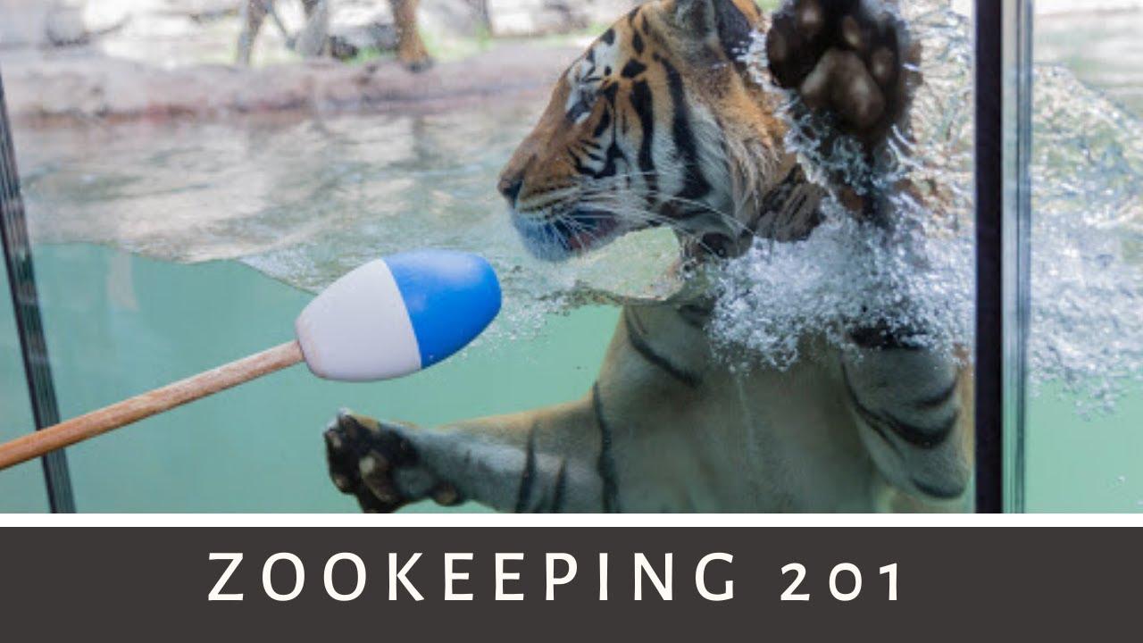Zookeeping 201 Busch Gardens Camp 2014 Youtube