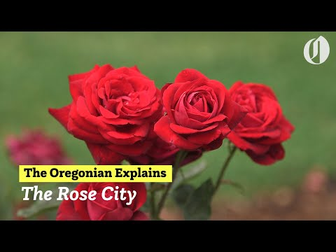 Why Is Portland The Rose City? The Oregonian Explains