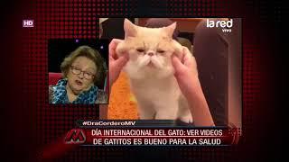 Día internacional del gato: ¿ver vídeos de gatitos es bueno para la salud?
