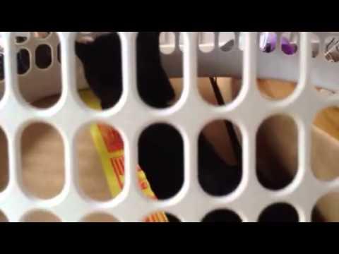 Box Cat Escapes