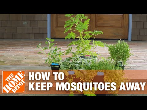 How To Get Rid Of Mosquitoes Using Mosquito Control Tips The