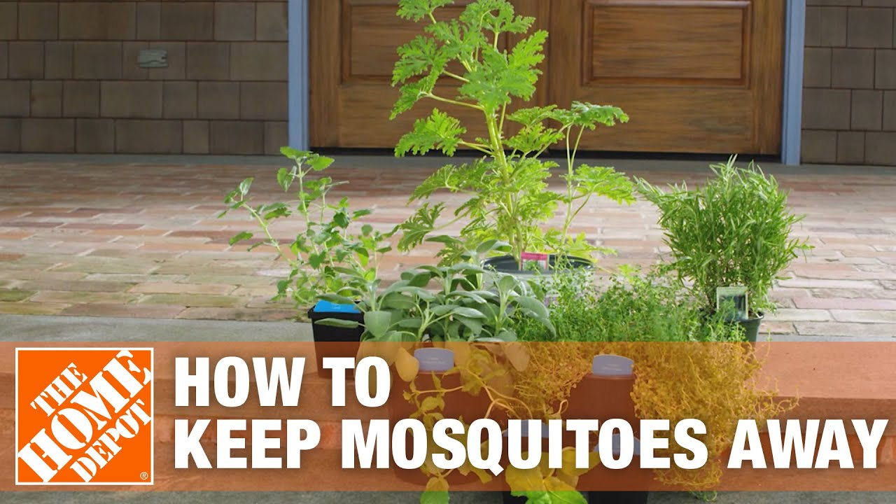 how to get rid of mosquitoes the home