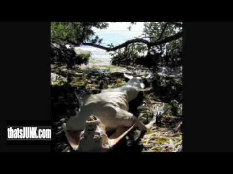 Mermaid found after tsunami - YouTube
