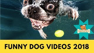 Funniest & Cutiest Dogs Reactions, Bloopers & Fails | Funny Dogs Videos Compilation #5
