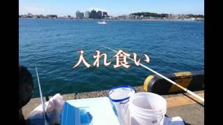 2017年5月の連休明け平日、朝6時半より江の島防波堤で 糸を垂らす、何か...