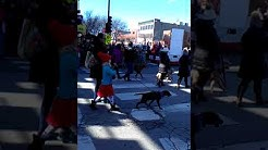 first ever dogs in parade at the chicago chinese new year event year of the dog