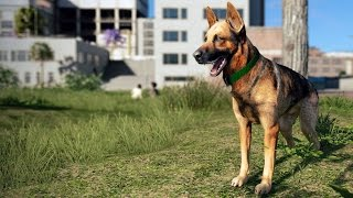 Watch Dogs 2 - German Shepard - Pet Animation & Dog Shown | Free Roam Gameplay (PC HD) [1080p60FPS]