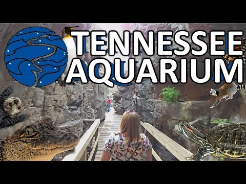 Tennessee Aquarium Chattanooga w/ TIPS on WHAT TO DO and WHERE TO GO