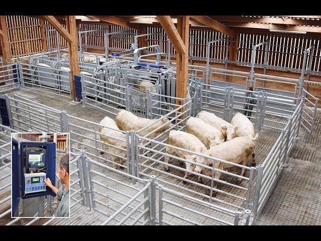 PASDELOU - Installation de contention automatisée pour bovins