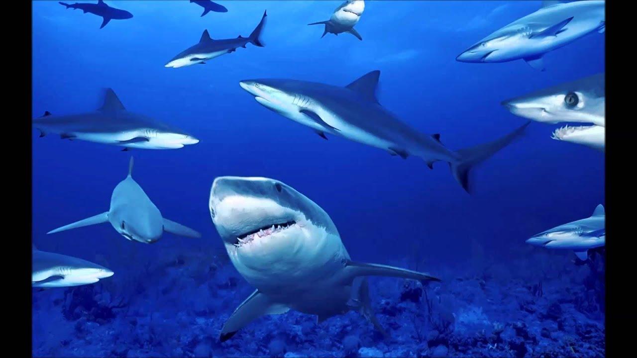 Se rompe acuario lleno de tiburones en china - YouTube