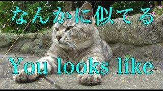 なにかに似てる! Cat looks like! 猫 子猫 cat kitty