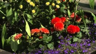 Многолетние цветочные культуры. Добрый урожай 26