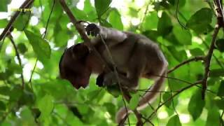 Flit unhappy & sad with mom crying angrily, Fauna makes baby Flit going down