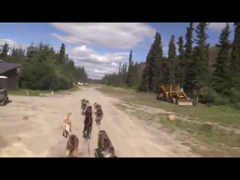 2015-06-27 Skagway Dogsledding and White Pass Yukon Rail