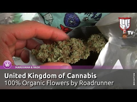 United Kingdom of Cannabis - 100% Organic Flowers by Roadrunner - Smokers Guide TV UK