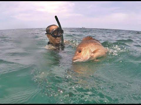 ยิงปลาทะเลอ่าวไทยจากประจวบถึงชุมพร Gulf of Thailand Spearfishing EP.1