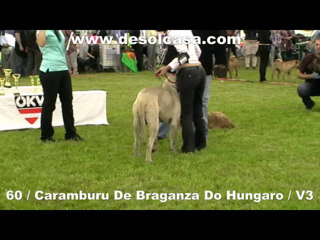 World Club Show Fila Brasileiro 19-5-2012 Anif Austria Travel Video