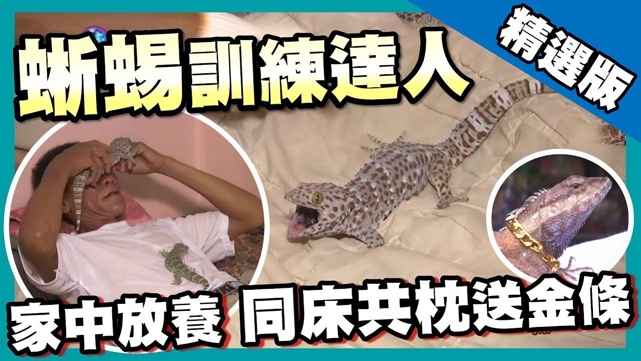 【泰國】蜥蜴訓練達人 同床共枕催眠秀 《世界第一等》682集精華版