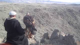 Hunting with Eagles - Mongolia's Wild West | Faraz Shibli