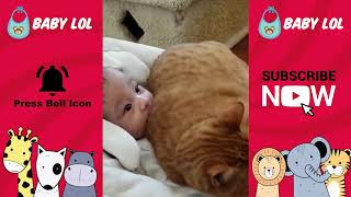 Funny Baby's Cats Videos   Cute and adorable Babies and Animals   2019 1
