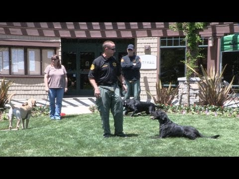 Ventura County Sheriff's K-9 Search and Rescue
