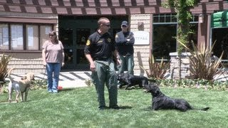 Ventura County Sheriff's K-9 Search and Rescue