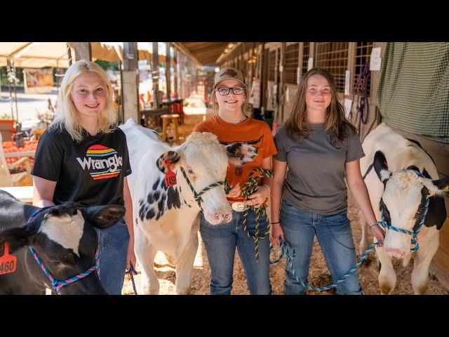Dairy Feeder Steer Project