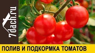 🍅 Как поливать и подкармливать томаты: опыт южного огородника - 7 дач