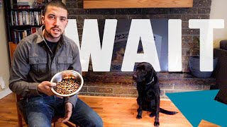 Teach Your Dog To Wait For Food