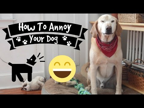 How To Annoy Your Dog
