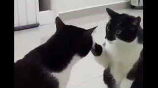 Кот смотрит на себя в зеркало прикол HD
