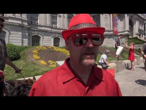 Caleche drivers protest outside Montreal City Hall
