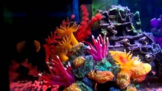 My 20 Gallon Long Freshwater Aquarium