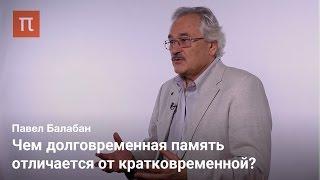 Стабильность и пластичность памяти - Павел Балабан