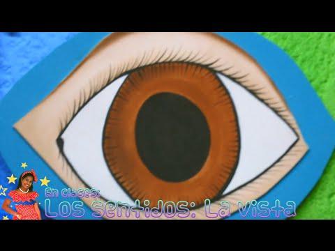 Los Sentidos La Vista Educación Para Niños Youtube
