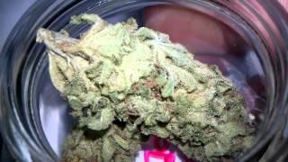 34-Strain Flower Room Final Harvest Video