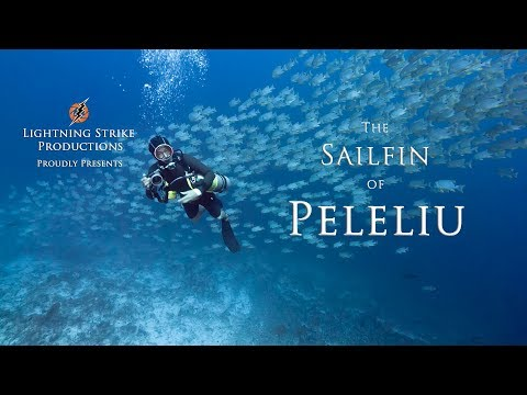 Sailfin Snapper Spawning Aggregation, Palau. 2017