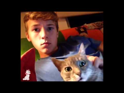 Ultimate Funny Cat Vines