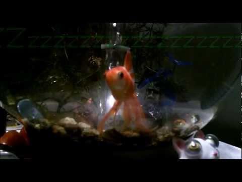 How To Wake A Sleeping Goldfish.