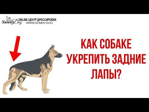 Как собаке укрепить задние лапы? Базовые упражнения по Дог-Фитнесу