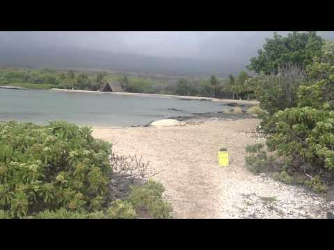 Rare Hawaiian Monk Seal at Kaloko-Honokohau National Historical Park