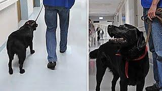 Er wollte den Hund ins Tierheim bringen, aber bereute es, als er wusste wer der Besitzer war!