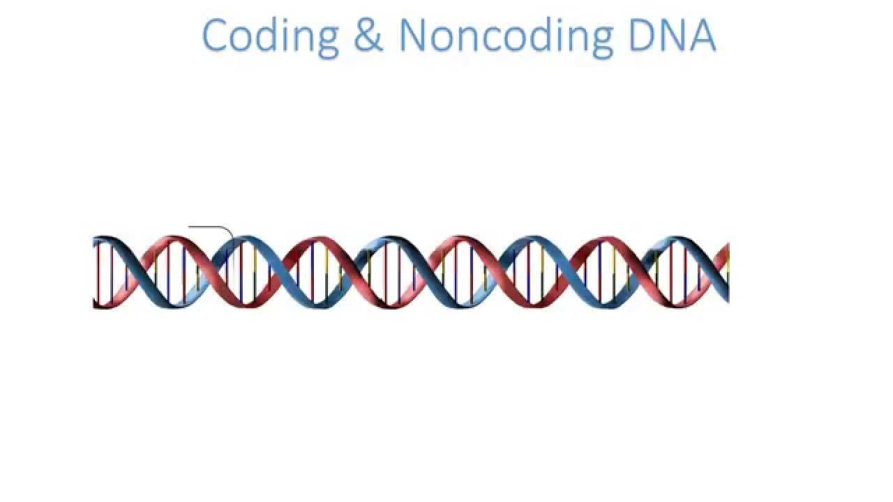 What is a noncoding strand?