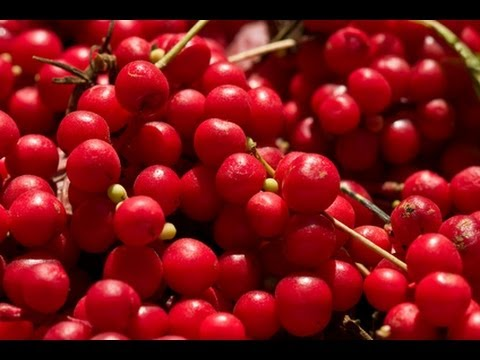 Health Benefits Of Schizandra Berry