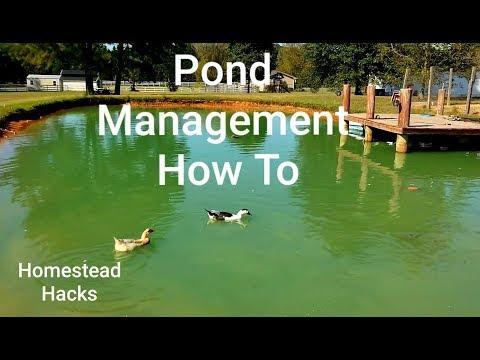 Farm Pond Management Catfish &Bluegill