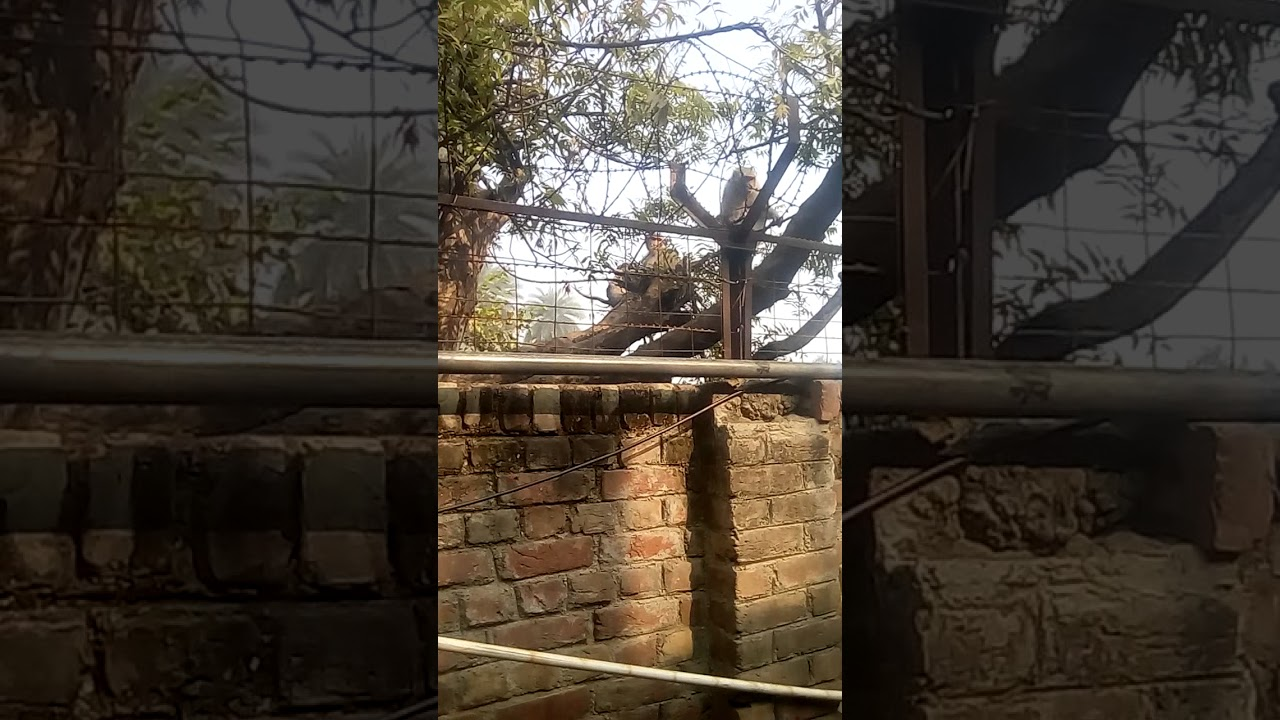 Bandar Se Aadmi Gootha - Youtube-4812