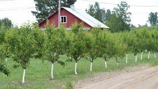 Фермер Лебедь О.С. Зачем в фермерском хозяйстве нужны сады. Фермерское хозяйство