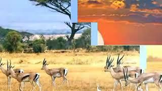 Title животные разных животных
