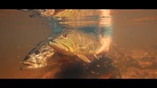 Gambar cover Agua Boa Amazon Lodge   Fly Fishing For Peacock Bass in Brazil